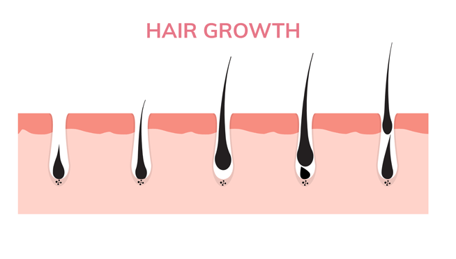 vedas cure hair growth cycle